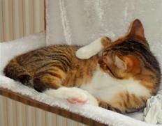 Katze Hängematte1
